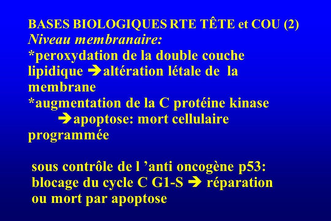 BASES BIOLOGIQUES RTE TÊTE et COU (3) niveau des macromolécules d ADN: principal mécanisme de mort cellulaire radio induite ruptures mono ou doubles brins à l origine de lésions létales ou sub létales: délétion, translocation, inversion des chromosomes.