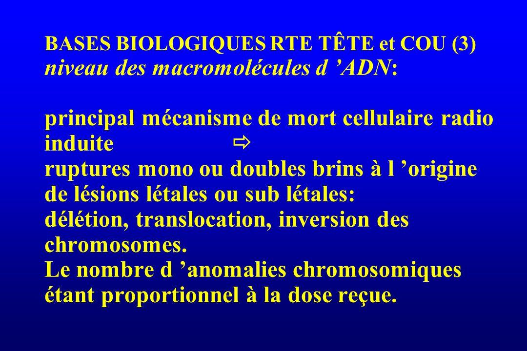 BASES BIOLOGIQUES RTE TÊTE et COU (4) Interactions à l échelon cellulaire G0 G1 S G2 M Cellules radiosensibles blocage en G2 f(dose) mort cellulaire en mitose ou mort reproductive