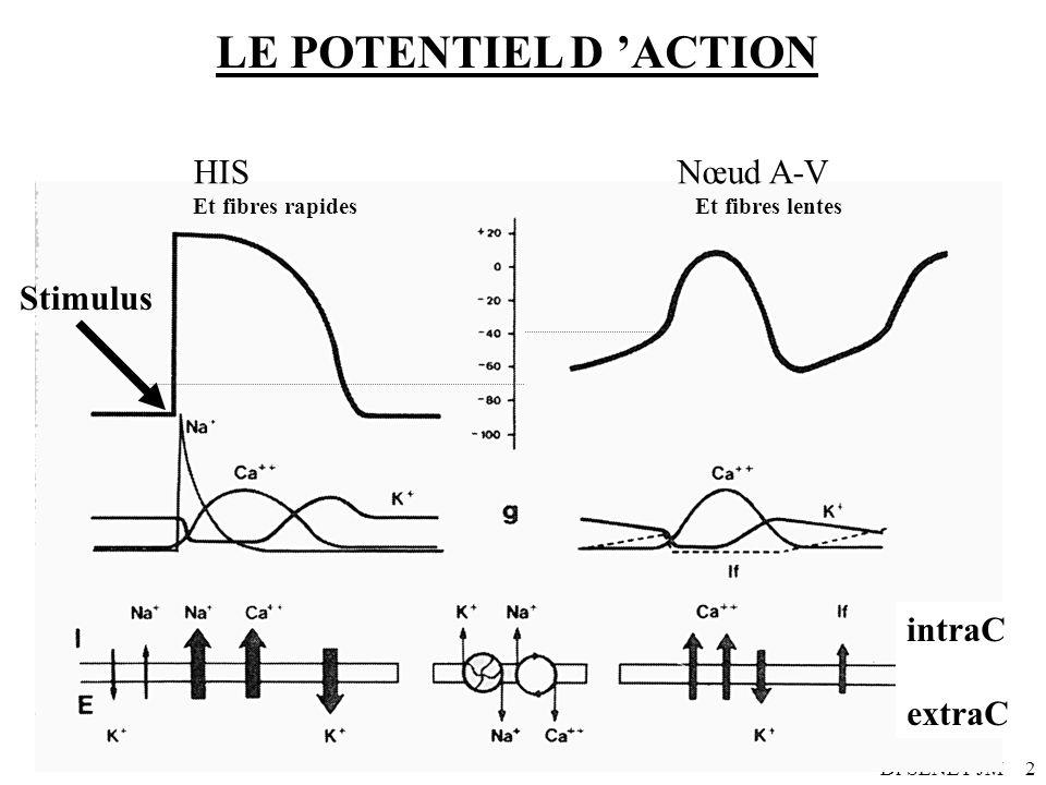 Dr SENET JM2 LE POTENTIEL D ACTION HIS Nœud A-V Et fibres rapides Et fibres lentes intraC extraC Stimulus