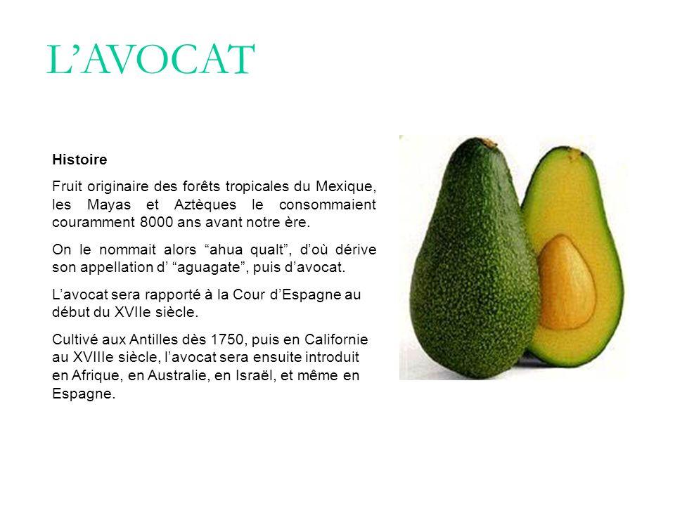 LAVOCAT Histoire Fruit originaire des forêts tropicales du Mexique, les Mayas et Aztèques le consommaient couramment 8000 ans avant notre ère. On le n