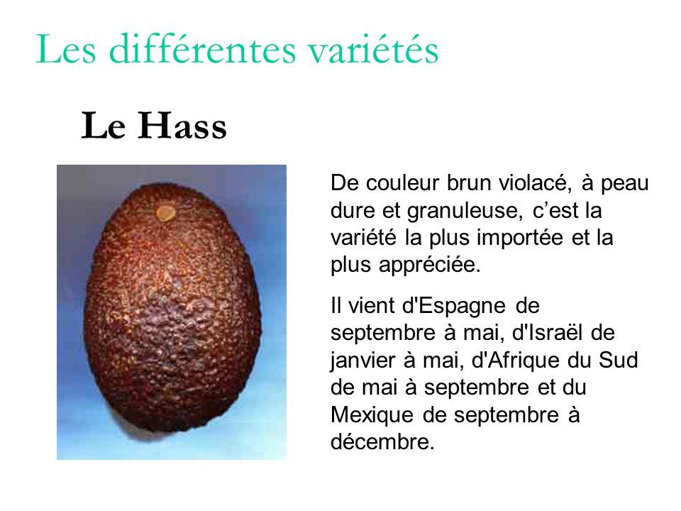 Les différentes variétés De couleur brun violacé, à peau dure et granuleuse, cest la variété la plus importée et la plus appréciée. Il vient d'Espagne
