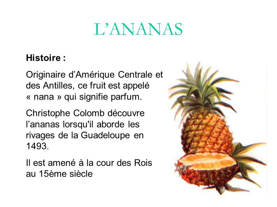 Différentes variétés Ananas Bouteille En forme de bouteille.