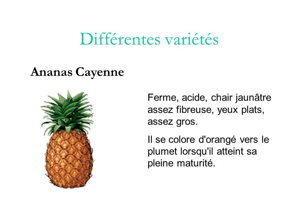 Différentes variétés Ananas Queen Petit ananas à chair ferme et juteuse, de couleur orangé avec un grand plumet.