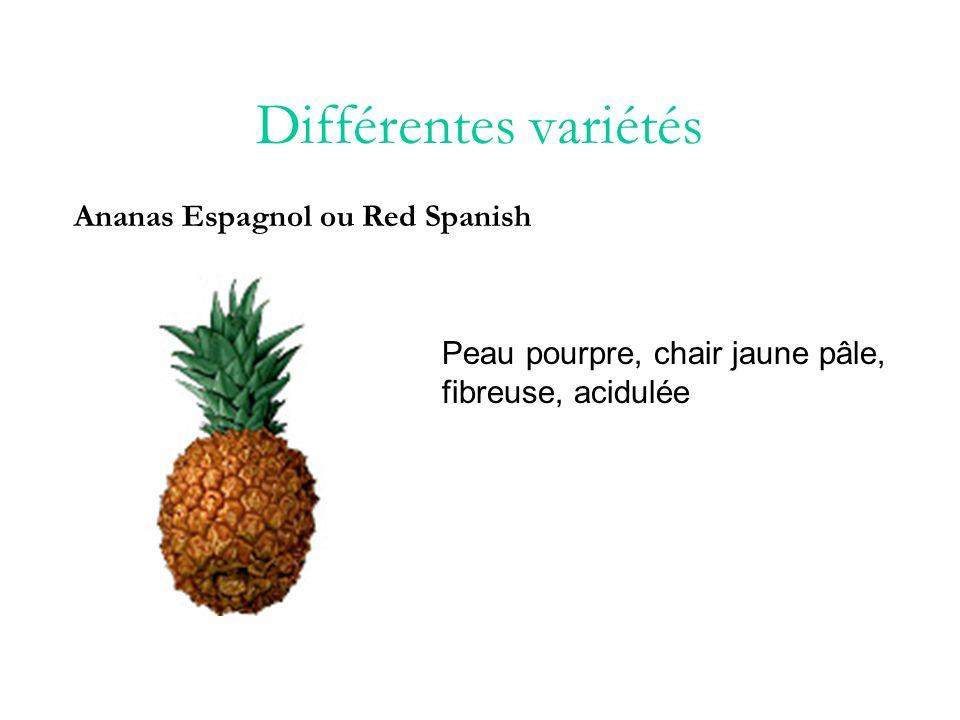 Différentes variétés Ananas Pernambuco Chair jaune ou blanchâtre très sucrée, douce et peu acide