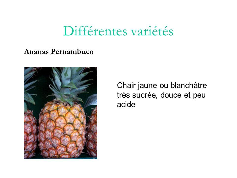 Différentes variétés Ananas Pain de Sucre Gros et allongé de chair sèche et cassante, il peut atteindre 4 kilos.