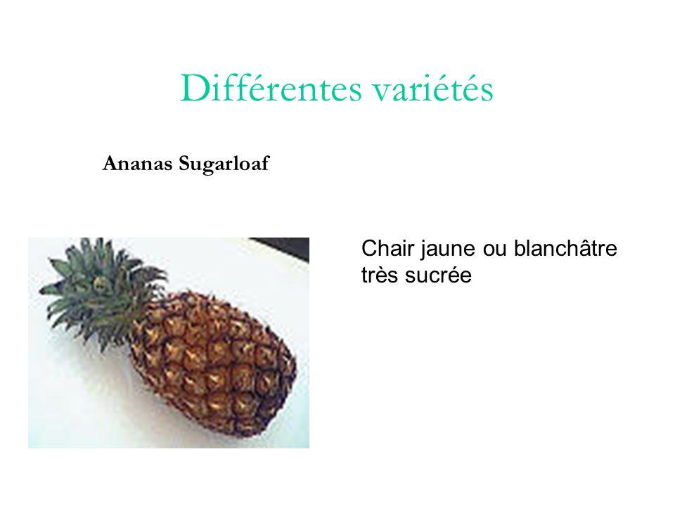 Différentes variétés Ananas Victoria A la Réunion on trouve un ananas tout petit à feuilles dentelées et à chair savoureuse