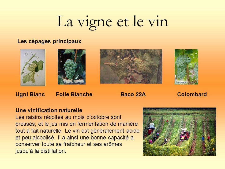 La vigne et le vin Une vinification naturelle Les raisins récoltés au mois d'octobre sont pressés, et le jus mis en fermentation de manière tout à fai