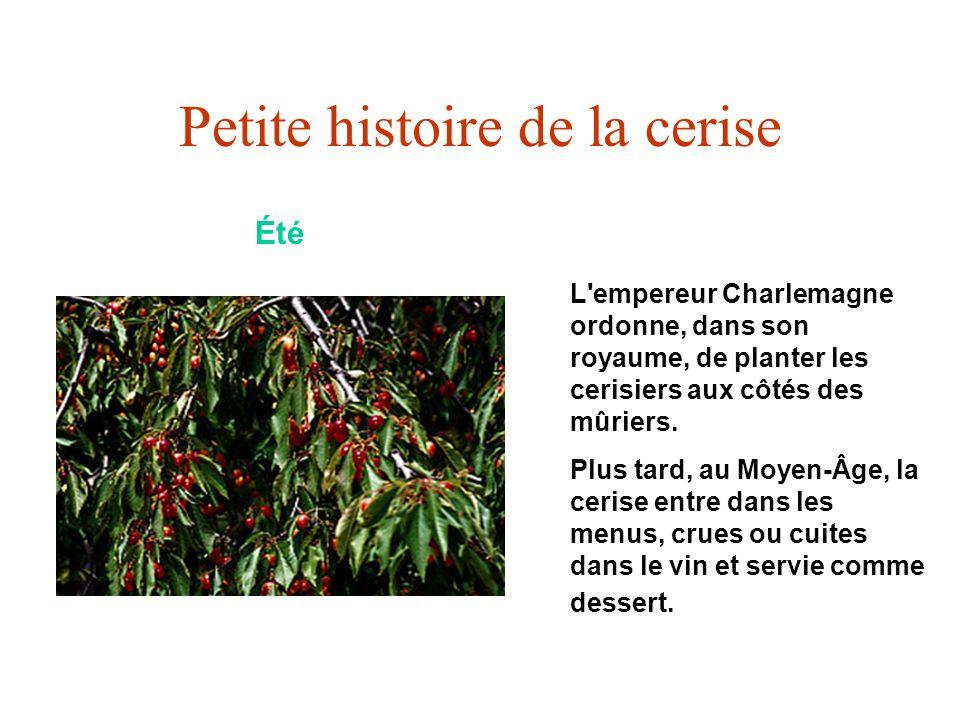 Petite histoire de la cerise Été L'empereur Charlemagne ordonne, dans son royaume, de planter les cerisiers aux côtés des mûriers. Plus tard, au Moyen