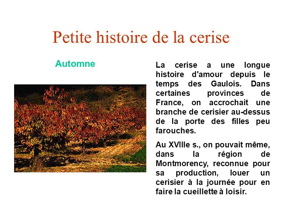 Petite histoire de la cerise Automne La cerise a une longue histoire d'amour depuis le temps des Gaulois. Dans certaines provinces de France, on accro