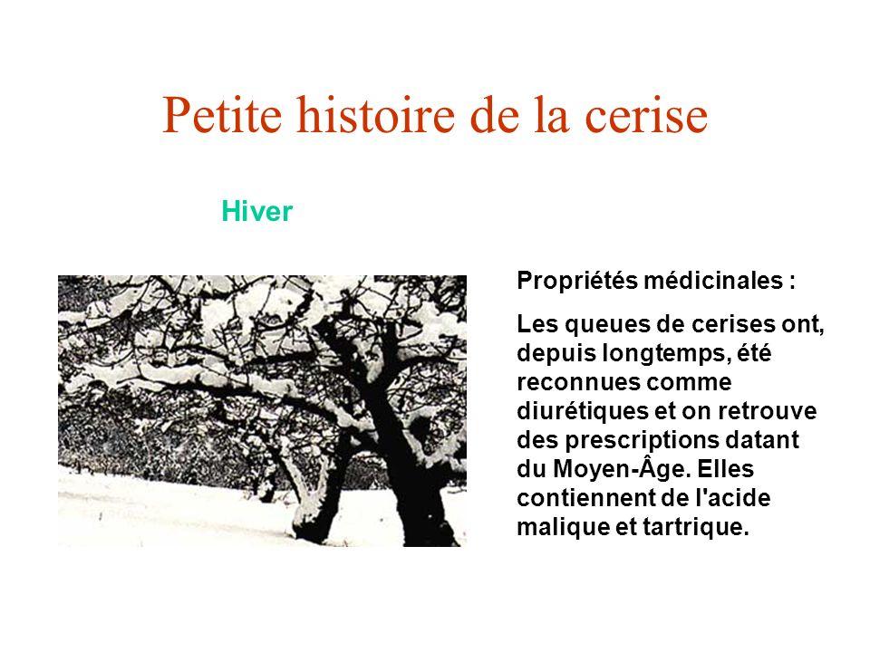 Petite histoire de la cerise Hiver Propriétés médicinales : Les queues de cerises ont, depuis longtemps, été reconnues comme diurétiques et on retrouv