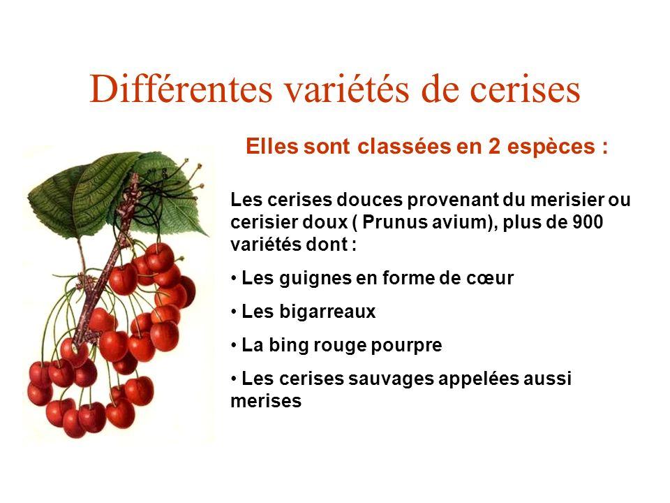 Différentes variétés de cerises Elles sont classées en 2 espèces : Les cerises douces provenant du merisier ou cerisier doux ( Prunus avium), plus de
