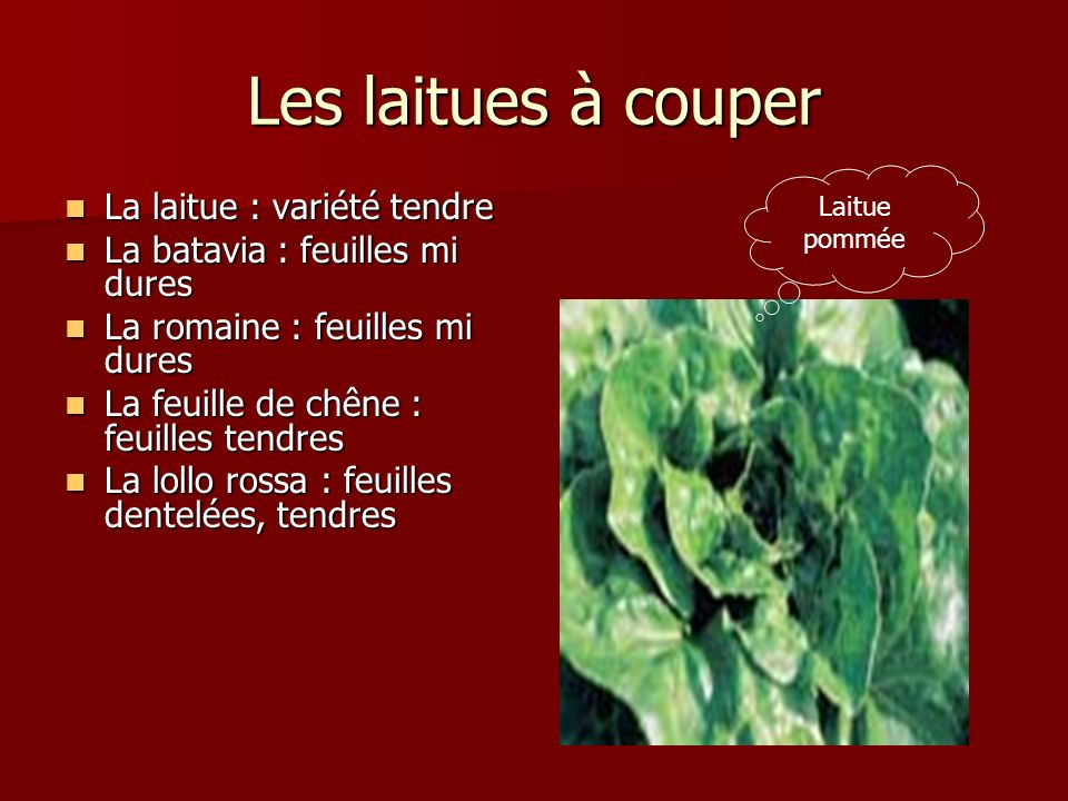 Les laitues à couper La laitue : variété tendre La batavia : feuilles mi dures La romaine : feuilles mi dures La feuille de chêne : feuilles tendres L