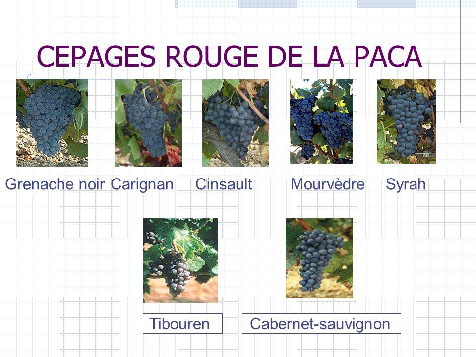 CEPAGES ROUGE DE LA PACA Grenache noir Carignan Cinsault Mourvèdre Syrah Tibouren Cabernet-sauvignon