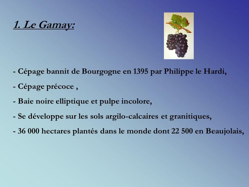 II. Un peu dœnologie: 1.Le gamay: 2. La vinification Beaujolaise ou la macération carbonique: 3. Les différentes appellations du Beaujolais: 4. Laccor