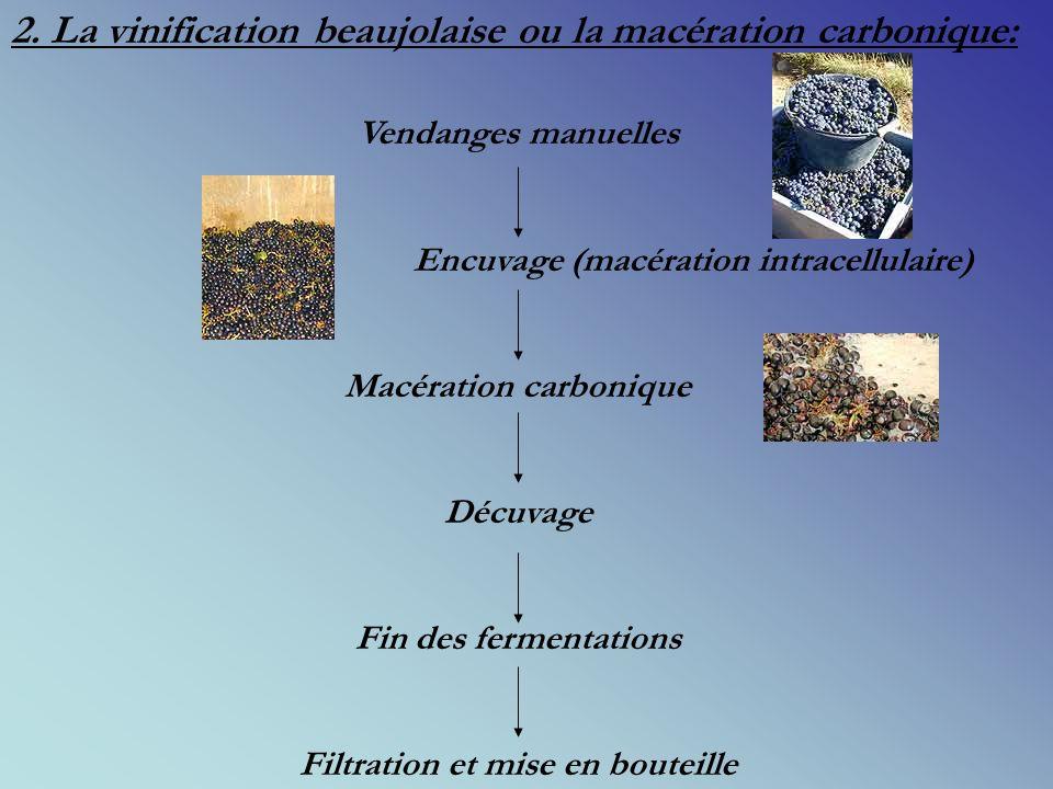 1. Le Gamay: - Cépage bannit de Bourgogne en 1395 par Philippe le Hardi, - Cépage précoce, - Baie noire elliptique et pulpe incolore, - Se développe s