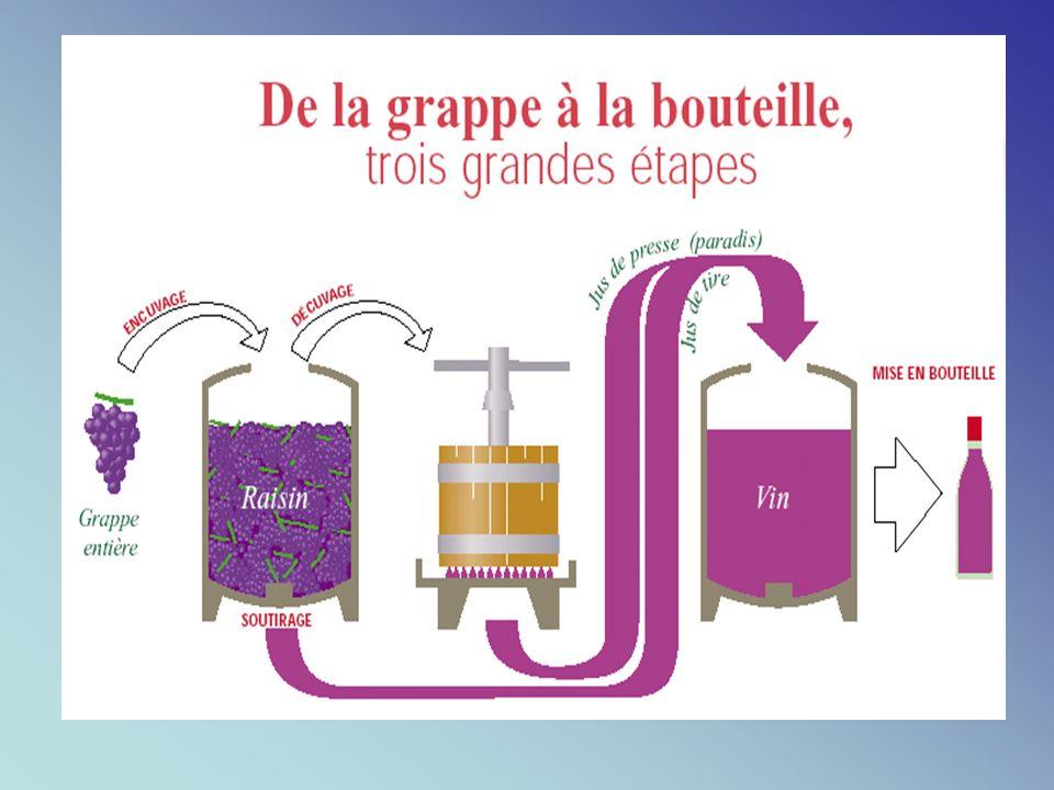 2. La vinification beaujolaise ou la macération carbonique: Vendanges manuelles Encuvage (macération intracellulaire) Macération carbonique Décuvage F