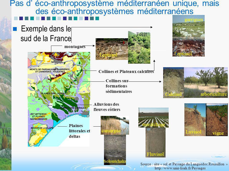 Pas d éco-anthroposystème méditerranéen unique, mais des éco-anthroposystèmes méditerranéens Exemple dans le sud de la France Alluvions des fleuves cô