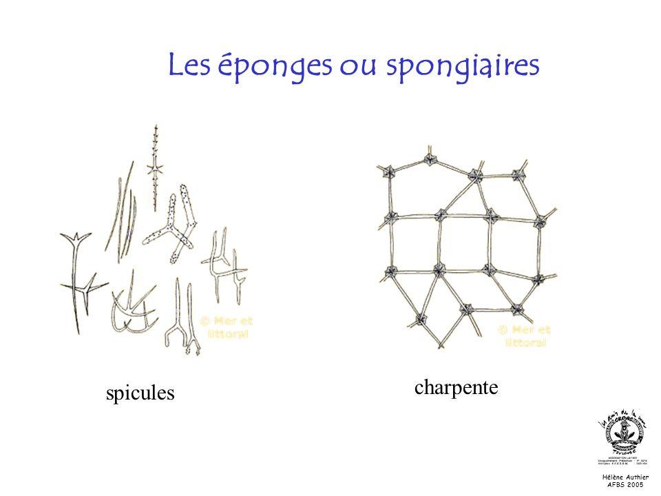 Les éponges ou spongiaires spicules charpente Hélène Authier AFBS 2005