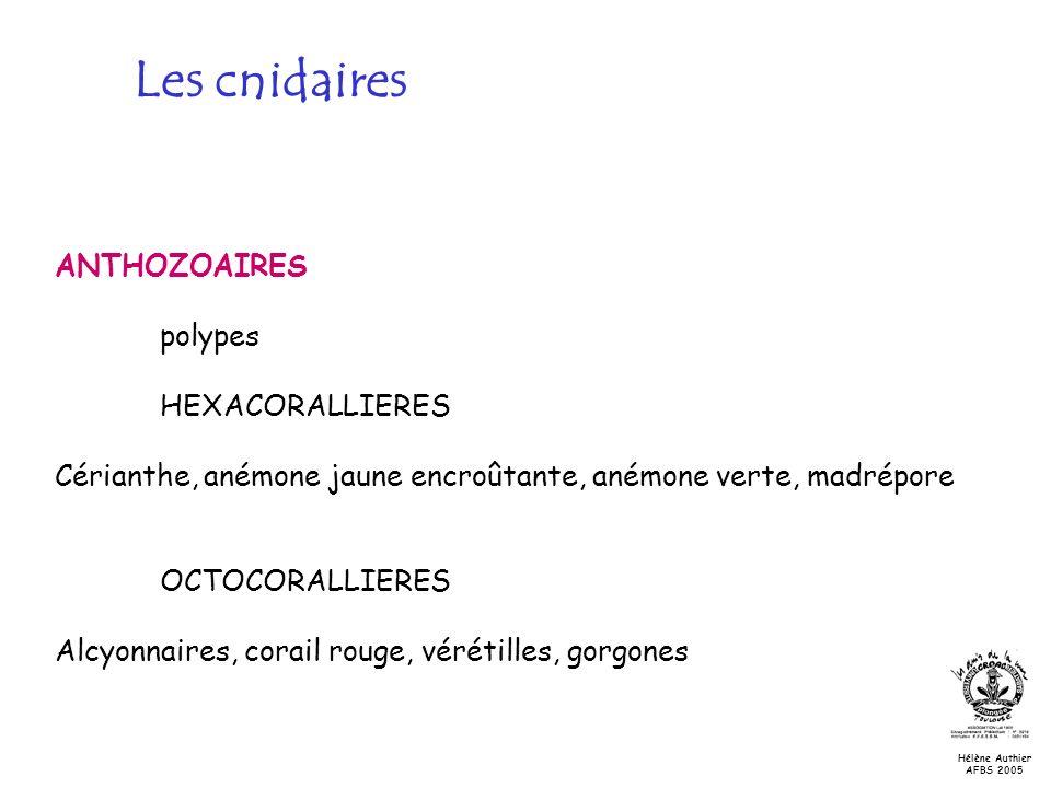 ANTHOZOAIRES polypes HEXACORALLIERES Cérianthe, anémone jaune encroûtante, anémone verte, madrépore OCTOCORALLIERES Alcyonnaires, corail rouge, véréti