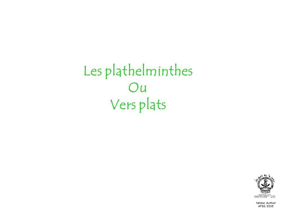 Les plathelminthes Ou Vers plats Hélène Authier AFBS 2005