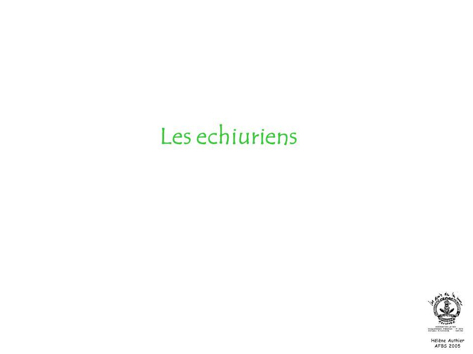 Les echiuriens Hélène Authier AFBS 2005