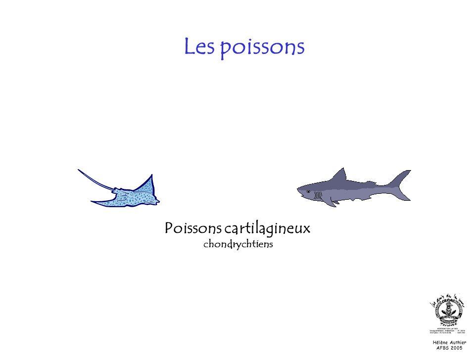 Poissons cartilagineux chondrychtiens Les poissons Hélène Authier AFBS 2005