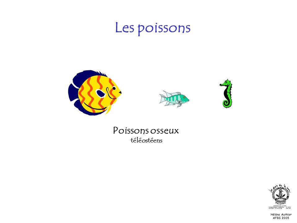 Poissons osseux téléostéens Les poissons Hélène Authier AFBS 2005