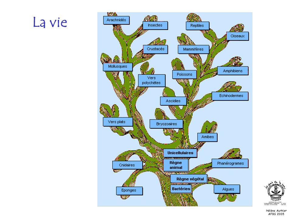 La vie 3 feuillets : triploblastiques 2 feuillets : diploblastiques Hélène Authier AFBS 2005