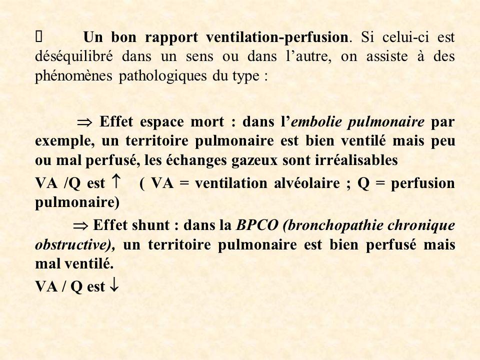 Un bon rapport ventilation-perfusion.