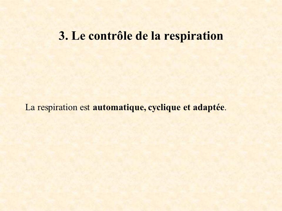 3. Le contrôle de la respiration La respiration est automatique, cyclique et adaptée.
