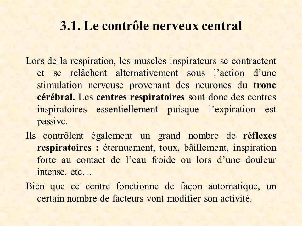 3.1. Le contrôle nerveux central Lors de la respiration, les muscles inspirateurs se contractent et se relâchent alternativement sous laction dune sti