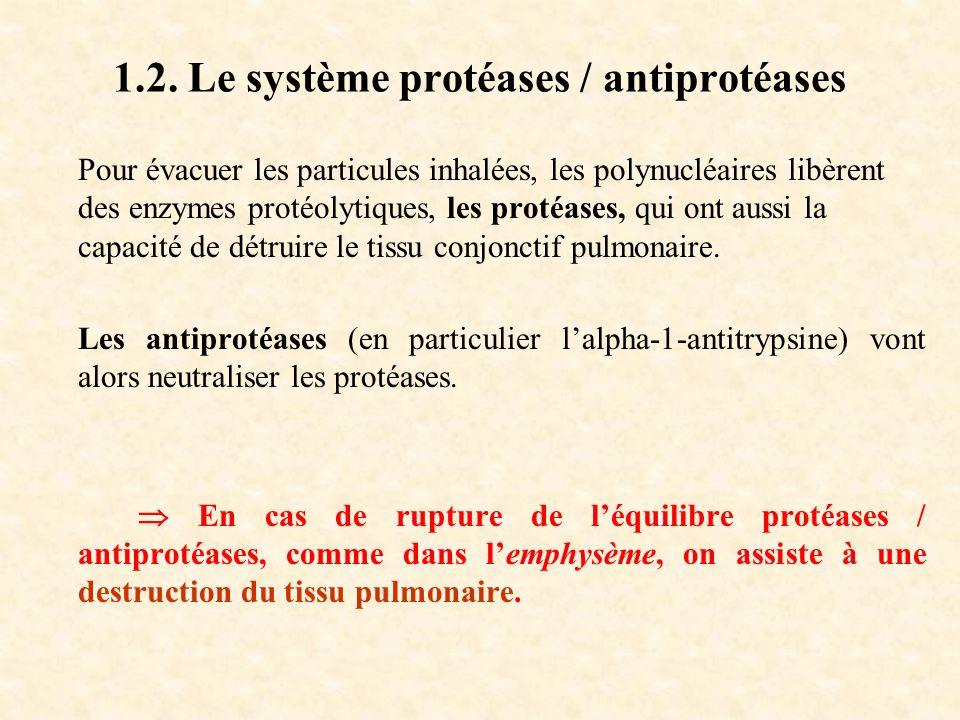 1.2. Le système protéases / antiprotéases Pour évacuer les particules inhalées, les polynucléaires libèrent des enzymes protéolytiques, les protéases,