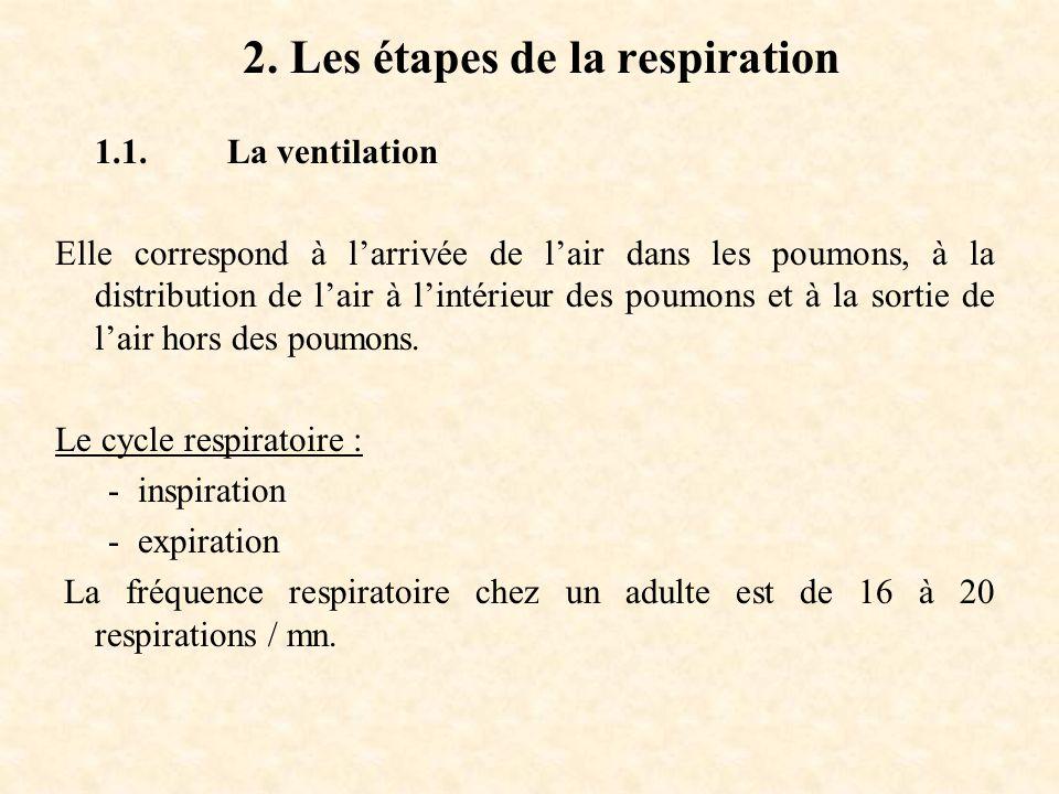2.Les étapes de la respiration 1.1.