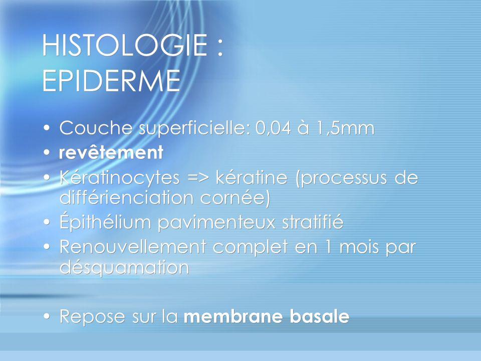 HISTOLOGIE : EPIDERME Couche superficielle: 0,04 à 1,5mm revêtement Kératinocytes => kératine (processus de différienciation cornée) Épithélium pavimenteux stratifié Renouvellement complet en 1 mois par désquamation Repose sur la membrane basale Couche superficielle: 0,04 à 1,5mm revêtement Kératinocytes => kératine (processus de différienciation cornée) Épithélium pavimenteux stratifié Renouvellement complet en 1 mois par désquamation Repose sur la membrane basale