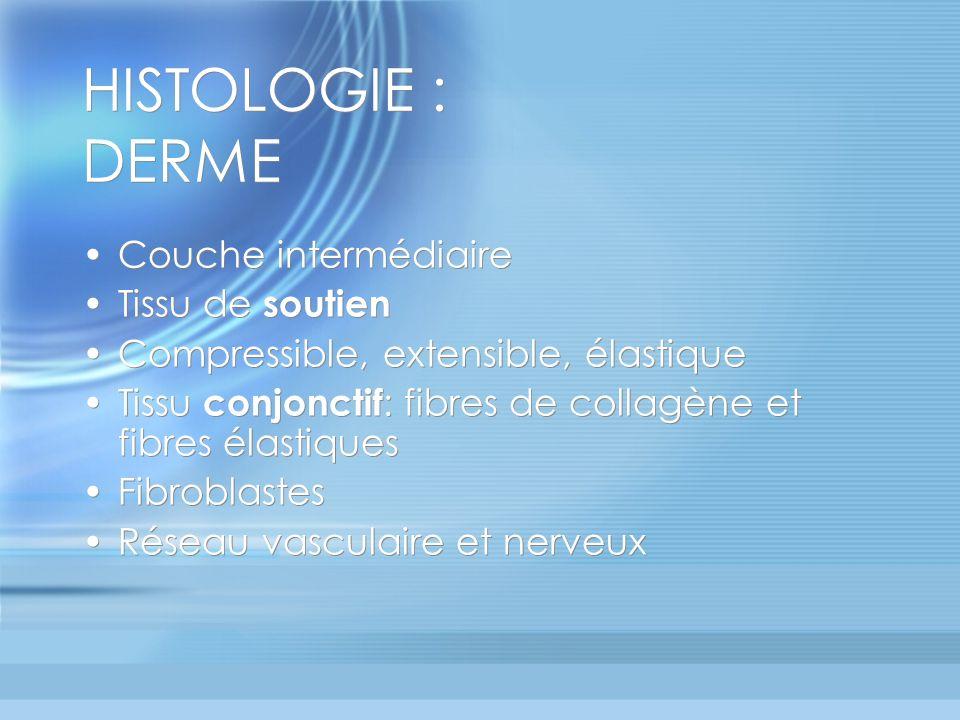 HISTOLOGIE : HYPODERME Couche profonde Coussin graisseux adipocytes Travées conjonctivo-élastiques Couche profonde Coussin graisseux adipocytes Travées conjonctivo-élastiques