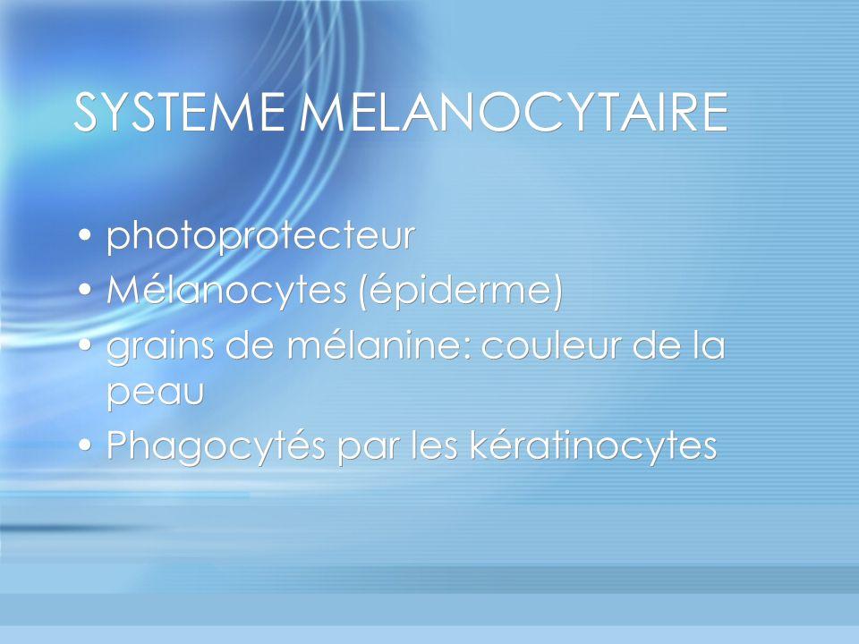 SYSTEME MELANOCYTAIRE photoprotecteur Mélanocytes (épiderme) grains de mélanine: couleur de la peau Phagocytés par les kératinocytes photoprotecteur Mélanocytes (épiderme) grains de mélanine: couleur de la peau Phagocytés par les kératinocytes