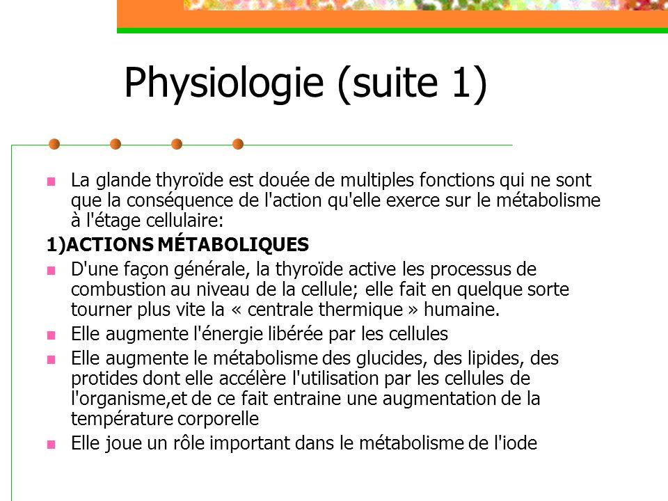 Physiologie (suite 2) 2) ACTION SUR LA CROISSANCE Cette action de stimulation qu exerce la thyroïde sur 1 activité cellulaire explique le rôle fondamental de cette glande au cours de la croissance, période d intense activité cellulaire.