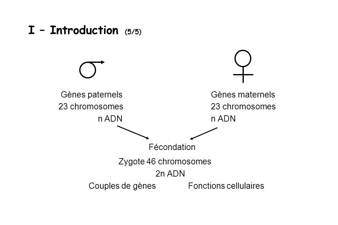 Gènes paternels Gènes maternels 23 chromosomes n ADN n ADN Fécondation Zygote 46 chromosomes 2n ADN Couples de gènes Fonctions cellulaires I – Introdu