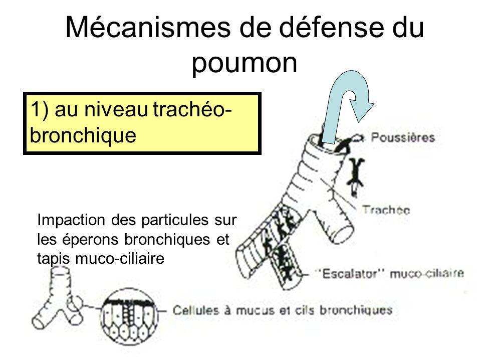1) au niveau trachéo- bronchique Mécanismes de défense du poumon Impaction des particules sur les éperons bronchiques et tapis muco-ciliaire