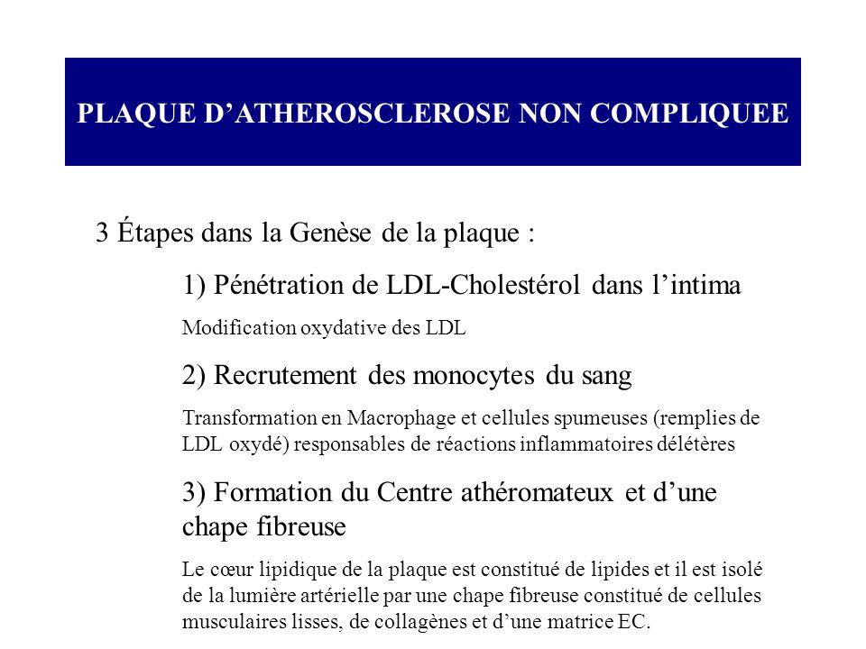 3 Étapes dans la Genèse de la plaque : 1) Pénétration de LDL-Cholestérol dans lintima Modification oxydative des LDL 2) Recrutement des monocytes du s