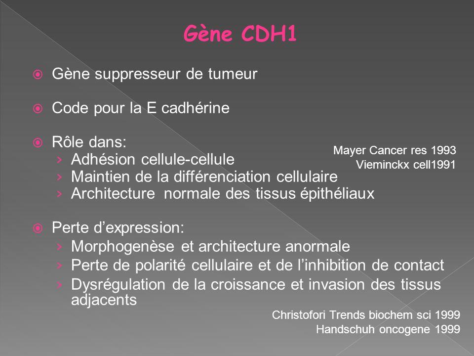 Gène suppresseur de tumeur Code pour la E cadhérine Rôle dans: Adhésion cellule-cellule Maintien de la différenciation cellulaire Architecture normale