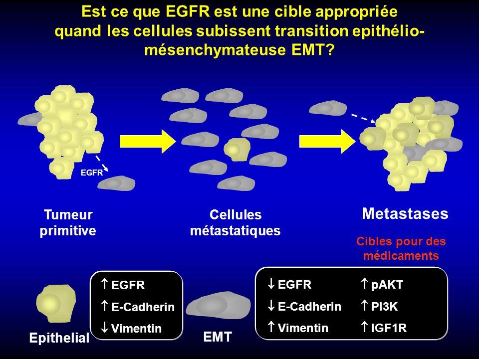 Est ce que EGFR est une cible appropriée quand les cellules subissent transition epithélio- mésenchymateuse EMT? Epithelial EMT EGFR pAKT E-Cadherin P