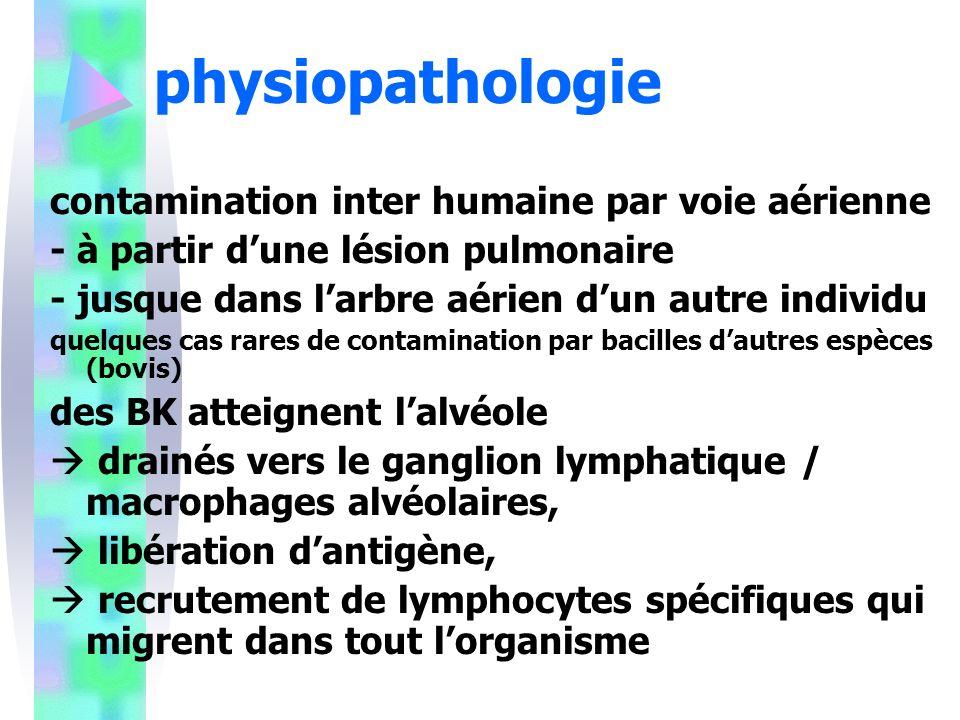 physiopathologie contamination inter humaine par voie aérienne - à partir dune lésion pulmonaire - jusque dans larbre aérien dun autre individu quelques cas rares de contamination par bacilles dautres espèces (bovis) des BK atteignent lalvéole drainés vers le ganglion lymphatique / macrophages alvéolaires, libération dantigène, recrutement de lymphocytes spécifiques qui migrent dans tout lorganisme