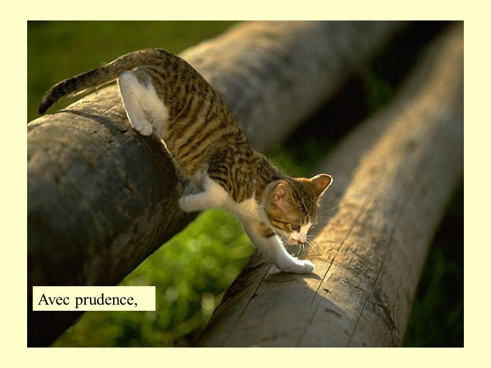 Prévoyance,