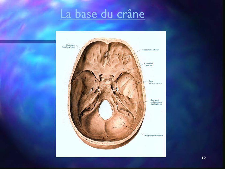 11 La voûte du crâne
