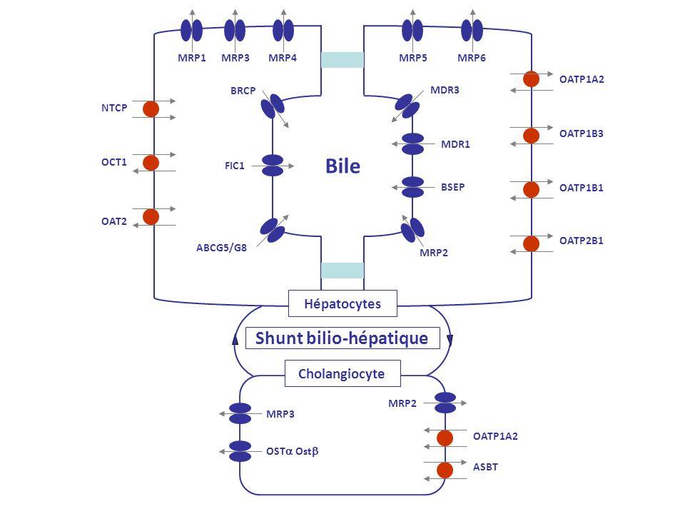 Shunt bilio-hépatique Hépatocytes Cholangiocyte Bile NTCP OCT1 OAT2 MRP1MRP3MRP4MRP5MRP6 MRP2 MRP3 MDR3 MDR1 BSEP BRCP FIC1 ABCG5/G8 OATP1A2 OATP1B3 O