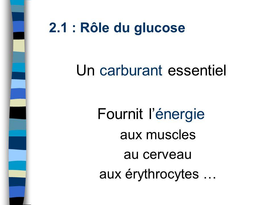 2.1 : Rôle du glucose Un carburant essentiel Fournit lénergie aux muscles au cerveau aux érythrocytes …