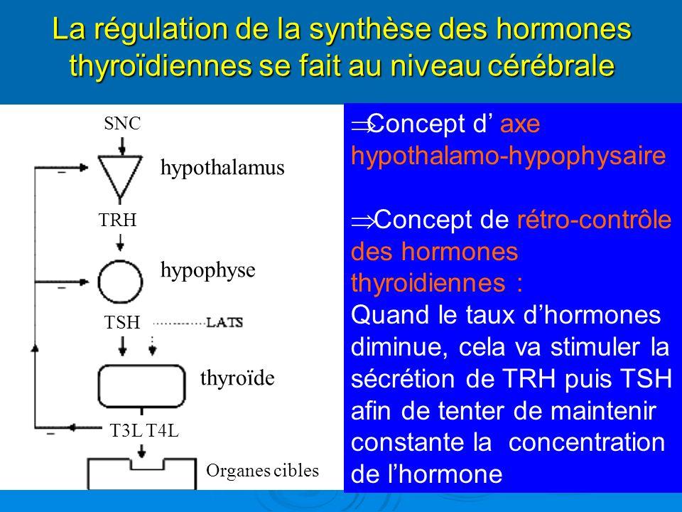 hypothalamus hypophyse thyroïde Organes cibles TSH TRH T3L T4L SNC La régulation de la synthèse des hormones thyroïdiennes se fait au niveau cérébrale Concept d axe hypothalamo-hypophysaire Concept de rétro-contrôle des hormones thyroidiennes : Quand le taux dhormones diminue, cela va stimuler la sécrétion de TRH puis TSH afin de tenter de maintenir constante la concentration de lhormone