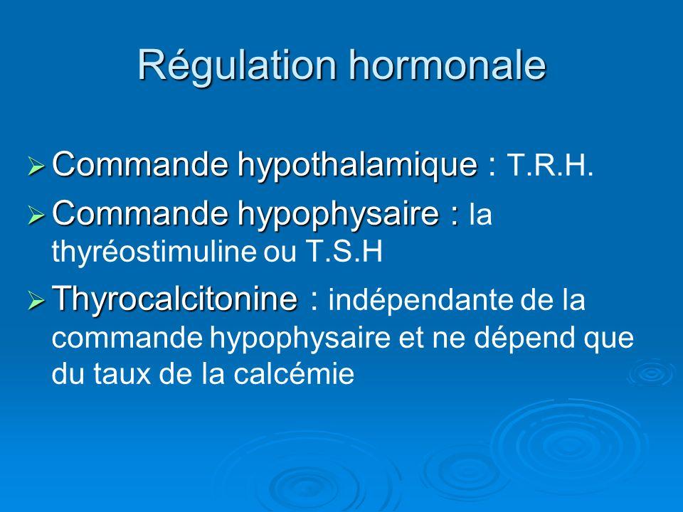 Régulation hormonale Commande hypothalamique Commande hypothalamique : T.R.H. Commande hypophysaire : Commande hypophysaire : la thyréostimuline ou T.