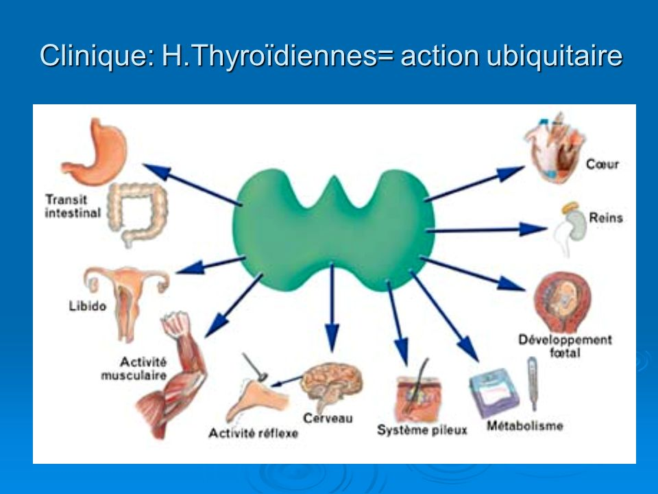 Clinique: H.Thyroïdiennes= action ubiquitaire
